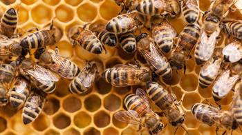 ミツバチ.jpeg
