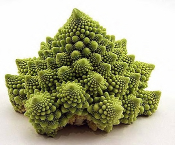 Fibonacci 8.jpg